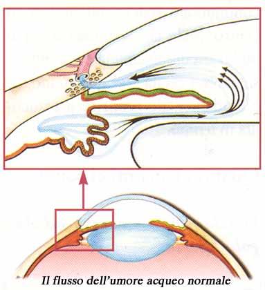 angolo irido cornea