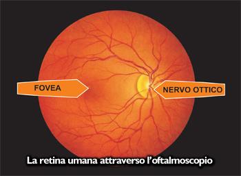 retinaumanainanatomia